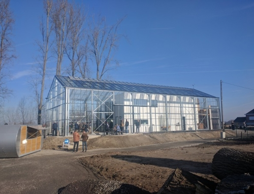 Glasshouse in Belgium
